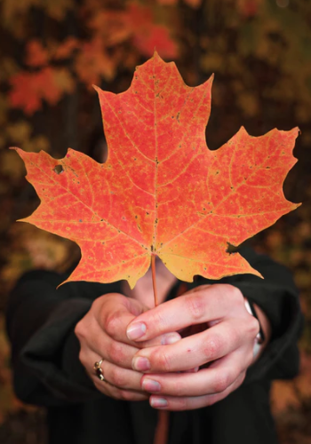 Woman holding a maple leaf. The best universities in Canada for international students.